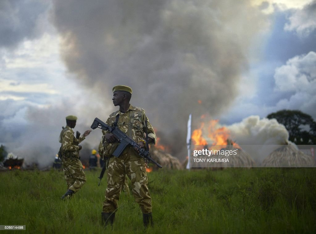 Kenya Wildlife Services (KWS) rangers stand guard around illegal stockpiles of burning elephant tusks, ivory figurines and rhinoceros horns at the Nairobi National Park on April 30, 2016. Kenyan President Uhuru Kenyatta set fire on April 30, 2016, to the world's biggest ivory bonfire, after demanding a total ban on trade in tusks and horns to end 'murderous' trafficking and prevent the extinction of elephants in the wild. / AFP / TONY