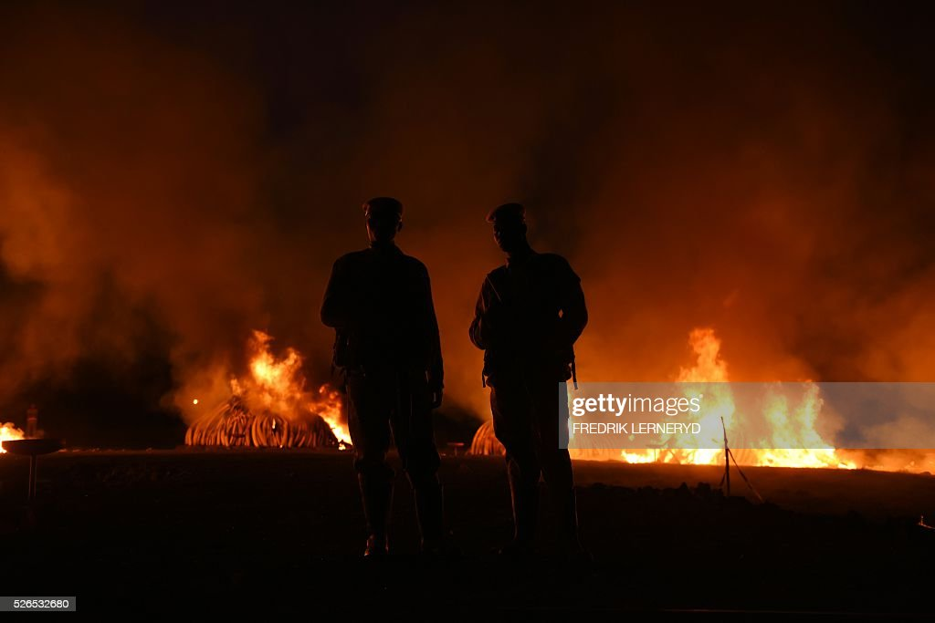 Kenya Wildlife Services (KWS) rangers stand guard around illegal stockpiles of burning elephant tusks, ivory figurines and rhinoceros horns at the Nairobi National Park on April 30, 2016. Kenyan President Uhuru Kenyatta set fire on April 30, 2016, to the world's biggest ivory bonfire, after demanding a total ban on trade in tusks and horns to end 'murderous' trafficking and prevent the extinction of elephants in the wild. / AFP / FREDRIK