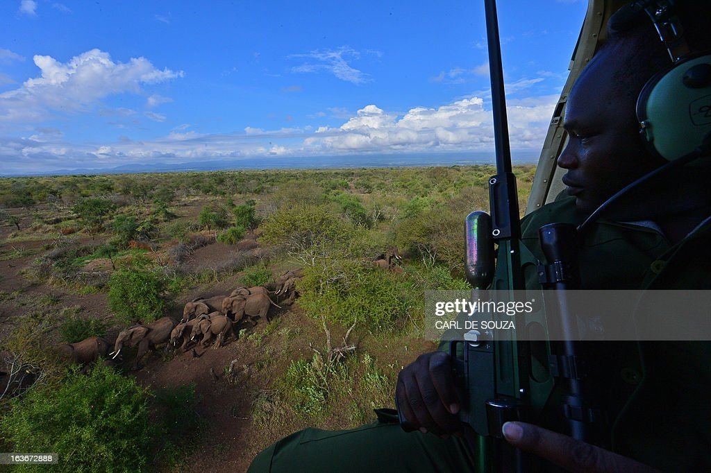 A Kenya Wildlife Services (KWS) vet holds a tranquiliser gun as he views wild elephants from a helicopter in Amboseli national park, Kenya on March 14, 2013. The International Fund for Animal Welfare (IFAW) School of Field Studies (SFS) and KWS partnered to fit tracking collars to elephants in and around Amboseli national park. The exercise has cost 100,000 USD and will monitor 6 elephants for 20 months in order ascertain migratory routes and other data. There are currently 60 collared elephants in Kenya of a total national elephant population of around 37,000. AFP PHOTO/Carl de Souza