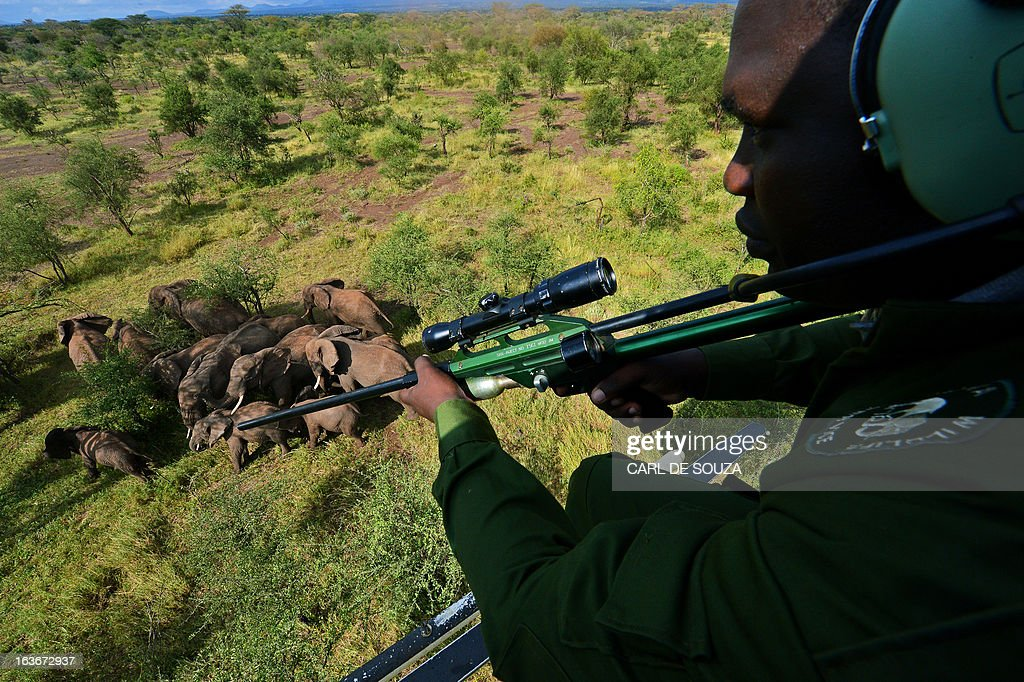 A Kenya Wildlife Services (KWS) vet holds a tranquiliser gun as he views wild elephants from a helicopter in Amboseli national park, Kenya on March 14, 2013. The International Fund for Animal Welfare (IFAW) School of Field Studies (SFS) and KWS partnered to fit tracking collars to elephants in and around Amboseli national park. The exercise has cost 100,000 USD and will monitor 6 elephants for 20 months in order assertain migratory routes and other data. There are currently 60 collared elephants in Kenya of a total national elephant population of around 37,000. AFP PHOTO/Carl de Souza