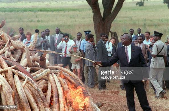 Kenyan President Daniel Arap Moi shown in a picture dated 18 July 1989 as he sets 12 tonnes of ivory tusks worth 25 million USD alight in a...