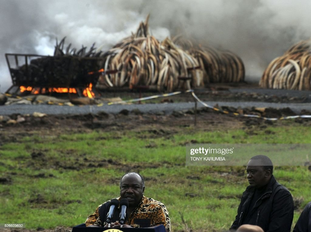 Kenya's President Uhuru Kenyatta fields questions from journalists as his Gabon counterpart Ali Bongo Ondimba listens on after they set ablaze stockpiles of elephant tusks and rhinoceros horns on April 30, 2016. Kenyan President Uhuru Kenyatta set fire on April 30, 2016, to the world's biggest ivory bonfire, after demanding a total ban on trade in tusks and horns to end 'murderous' trafficking and prevent the extinction of elephants in the wild. / AFP / TONY