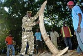 A Kenya's wildlife service officer holds one of the ivory tusks used as an evidence on a case against Feisal Mohammed Ali also known as the ivory...