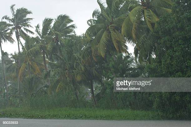 A rainy, windy day disturbs the palm trees in Kerala.