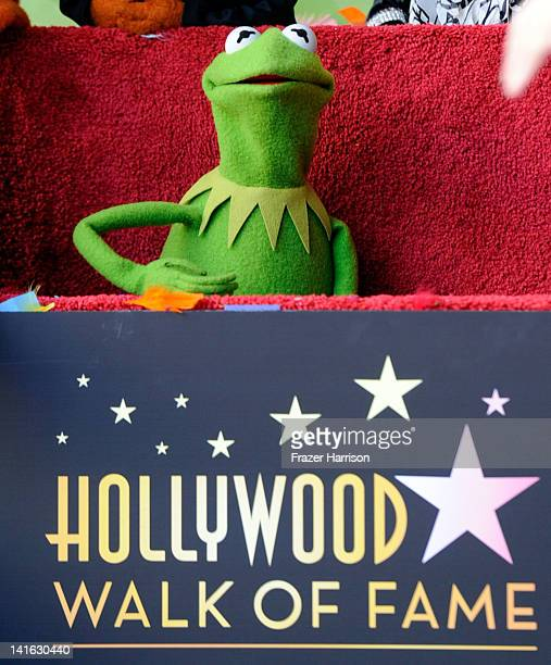 Kermit the Frog who along with the other Muppets were honored with 2466th Star on the Hollywood Walk of Fame in front of the El Capitan Theatre on...