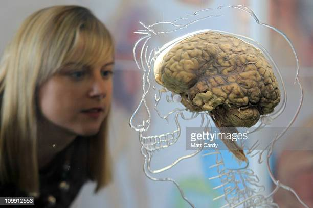 Kerrie Grist looks at a real human brain being displayed as part of new exhibition at the @Bristol attraction on March 8 2011 in Bristol England The...