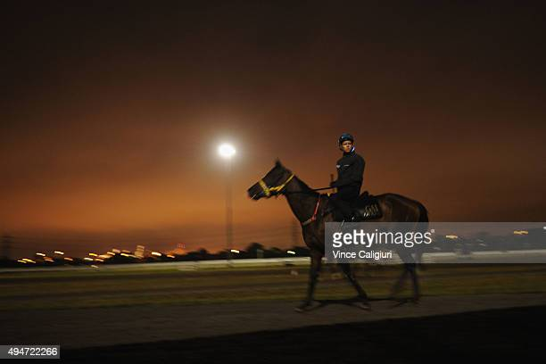 Kerrin McEvoy riding Bohemian Lily during a trackwork session at Flemington Racecourse on October 29 2015 in Melbourne Australia
