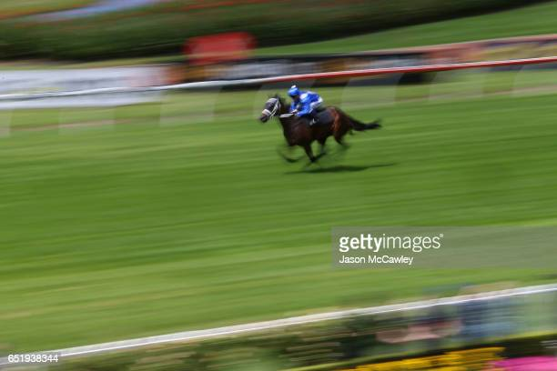 Kerrin McEvoy riding Winx takes part in an exhibition gallop a week out from her next race in the George Ryder Stakes during Ladies Day at the 2017...