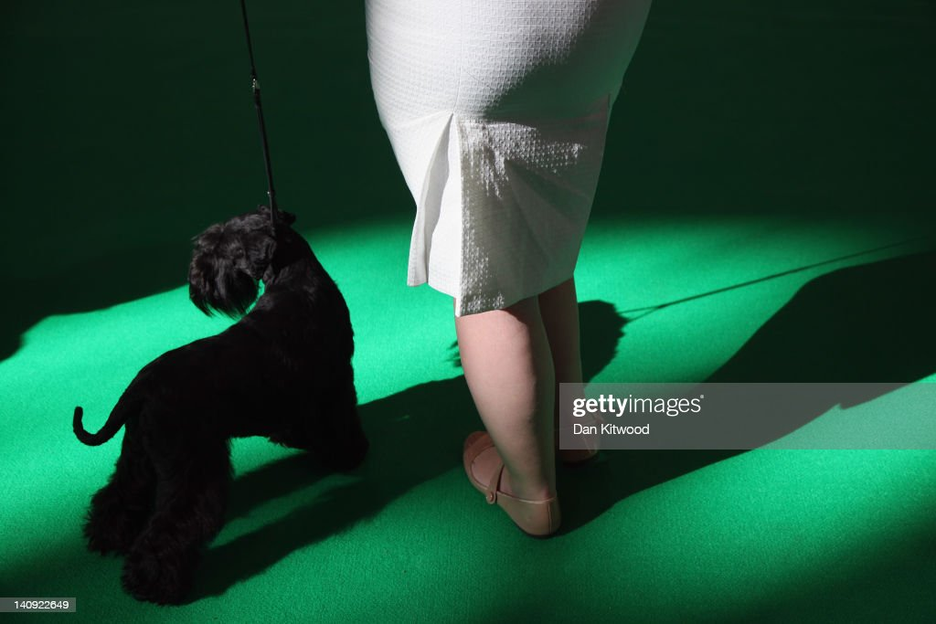 A Kerry Blue Terrier and owner attend Day one of Crufts at the Birmingham NEC Arena on March 8, 2012 in Birmingham, England. During the annual four-day competition nearly 22,000 dogs and their owners will compete in a variety of categories, ultimately seeking the coveted prize of 'Best In Show'.