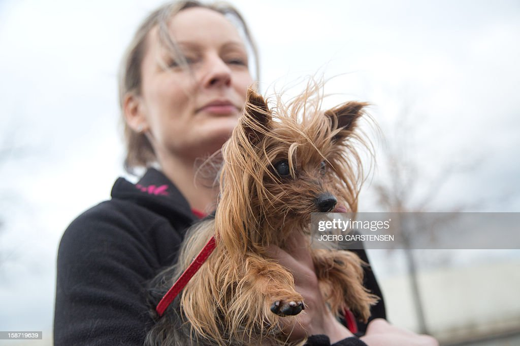 Kerstin Stein Stahlberg, animal keeper from an animal shelter in Berlin, holds on December 26, 2012 a Yorkshire terrier that was abandoned shortly before Christmas. At least 16 animals were abandoned during Christmas in the German capital and found a shelter at the official animal collection center. AFP PHOTO / JOERG CARSTENSEN GERMANY OUT