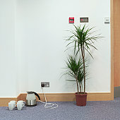 Kettle and four cups by potted plant in empty office