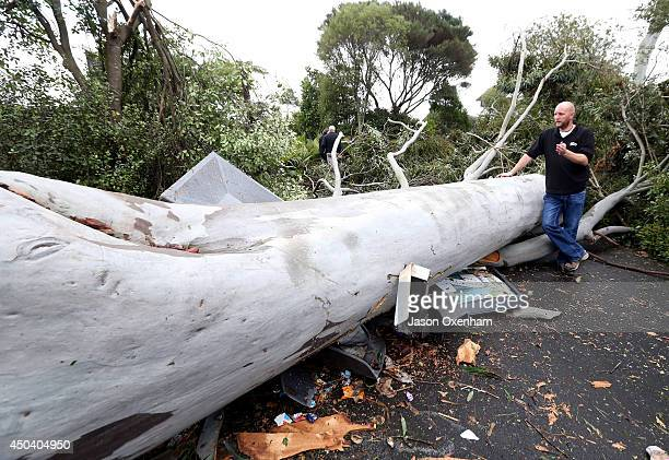 Kevin Buley of Auckland Zoo inspects an uprooted Eucalyptus Tree on June 11 2014 in Auckland New Zealand The Auckland Zoo was closed for the day as a...