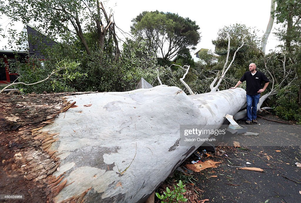Kevin Buley of Auckland Zoo inspects an uprooted Eucalyptus Tree on June 11, 2014 in Auckland, New Zealand. The Auckland Zoo was closed for the day as a result of storm damage, with workers making repairs and removing tree branches and debris. Cyclonic winds and heavy rainfall has caused damage across Auckland, Northland and Waikato. Storms resulted in wide ranging power outages and property damage.