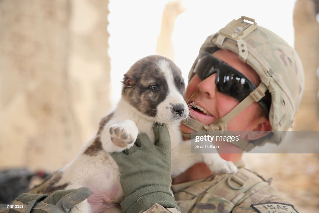SGT Kevin Ingram from Wheeling, West Virginia with the U.S. Army's 4th squadron 2d Cavalry Regiment comforts a puppy that had its ears cut off while visiting an Afghan National Police (ANP) outpost that was once home to Osama Bin Laden during a patrol on February 25, 2014 near Kandahar, Afghanistan. Ears are often removed from puppies to prepare them to become fighting dogs. Fourth squadron 2d Cavalry Regiment is responsible for defending Kandahar Airfield against rocket attacks from insurgents.