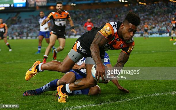Kevin Naiqama of the Tigers keeps the ball in play for James Tedesco to score during the round eight NRL match between the Canterbury Bulldogs and...