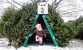 Kevin Sears explores a hiding place while choosing a tree and visiting his grandfather Tom Meyers of Cape Elizabeth who was selling trees at the...
