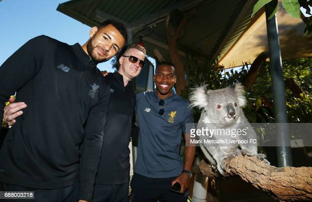 Kevin Stewart Steve McManaman and Daniel Sturridge pose with a koala during a Liverpool FC player visit to Taronga Zoo on May 25 2017 in Sydney...