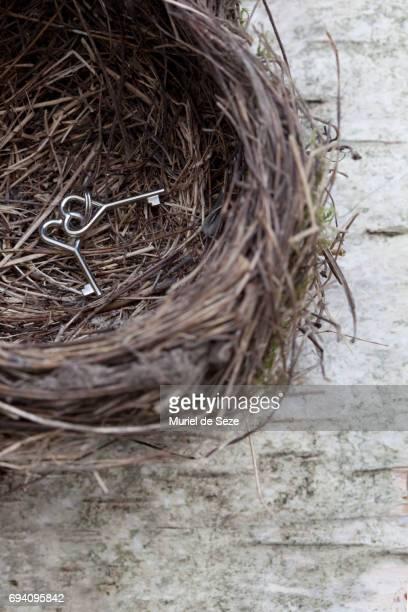 Key seat in bird nest