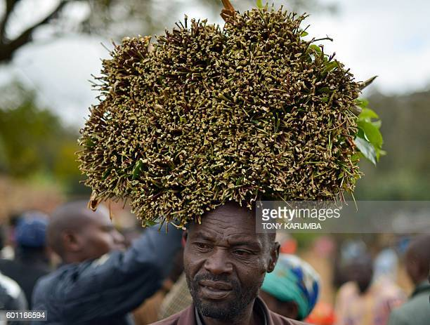 A khat farmer hawks his khat harvest at a local open air market at Maua in Meru county on September 9 2016 in Kenya's central province Farmer of the...