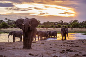 Afternoon at Khwai area in Botswana admiring the elephants drinking water.