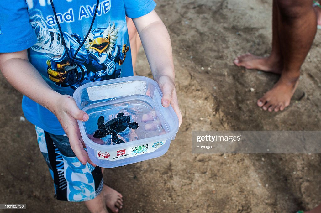 A kid carries a sea turtle hatchling to the beach during a release program by the Bali Sea Turtle Society on April 9, 2013 in Kuta, Bali, Indonesia. The sea hatchlings release program is part of the turtle conservation effort which has been taking place at Kuta Beach since 2002.