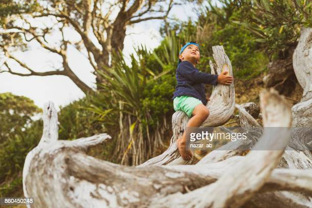 Kid climbing on a washed up wood on beach.
