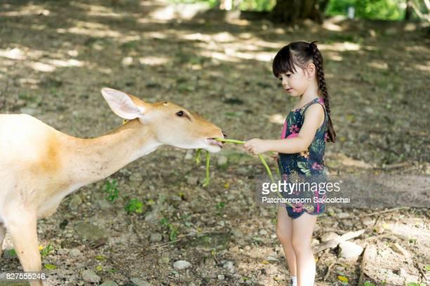 kid feeding deer at the zoo