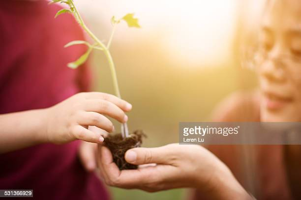 Kid giving seedling to adult in sunlight