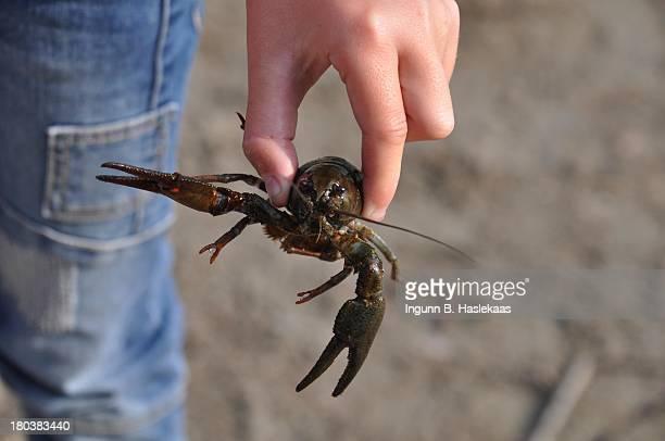 Kid holding a live freshwater crayfish