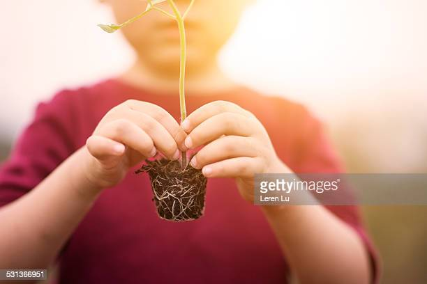 Kid holding seedlings in sunlight