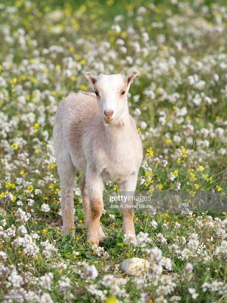 Kid in a field of flowers