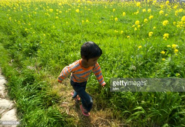 Kid running in farmland of village Bazida Zattan photographed on 24th February 2010 in Karnal India