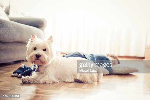 Kid sleeping on the floor and his westie puppy