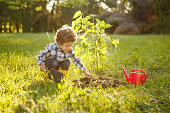 Little boy gardening in yard tending recently planted tree on sunny day.