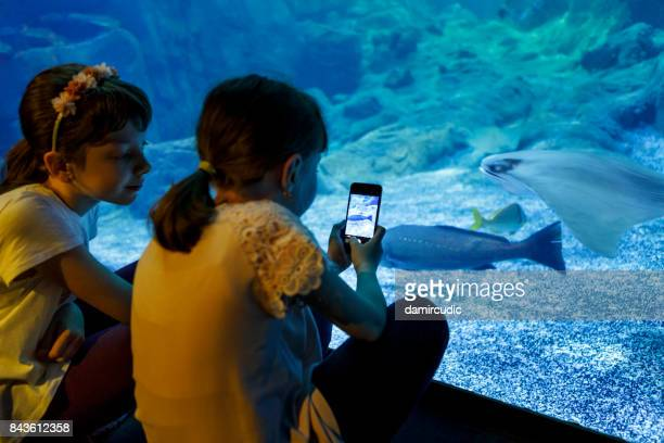 Kids capturing pictures of fish in aquarium