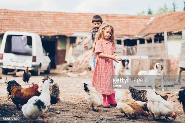 Kids feeding the chickens