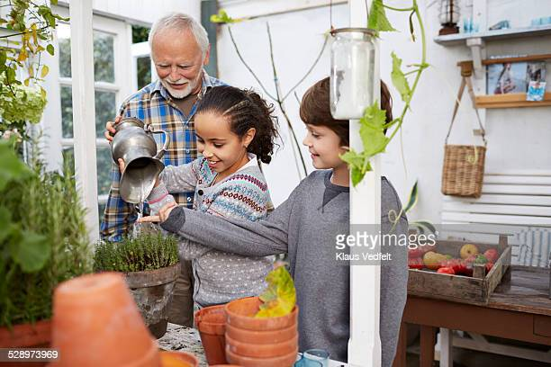 Kids & grandfather watering thyme plant