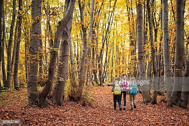 Kids hiking in autumn beech forest