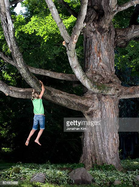 Kids in Maple Tree