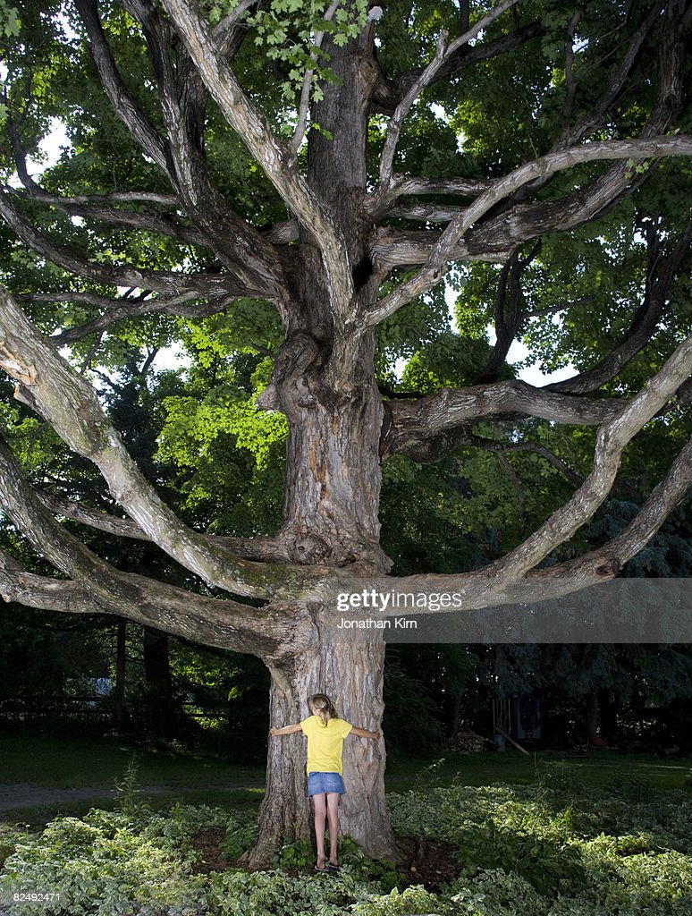 kids in maple tree stock photo getty images