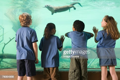 Kids looking at otter swimming : Stock Photo