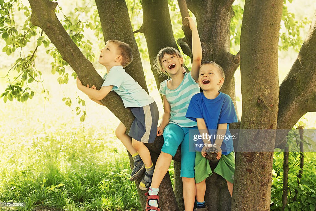 Kids on tree : Stock Photo