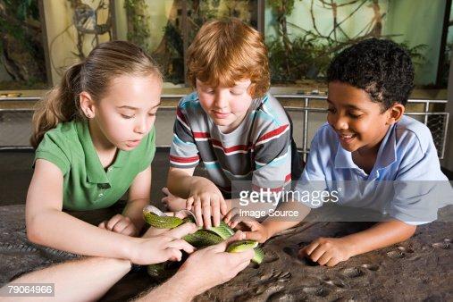 Kids touching snake