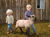 Boys taking care of 4-H lamb on family ranch in Big Timber, Montana
