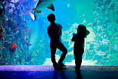 kids-boy and girl- watching fishes in aquarium, learn marine life