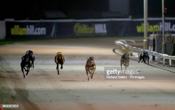 Killieford Banjo wins the first race at Newcastle during the William Hill All England Cup Festival at Newcastle Greyhound Stadium PRESS ASSOCIATION...