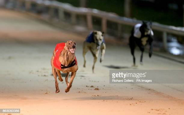 Killieford Banjo wins the first race at Newcastle during the William Hill All England Cup Festival at Newcastle Greyhound Stadium