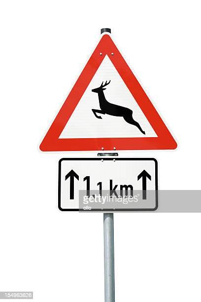 Travessia de veados-próxima 1.1 Quilómetros