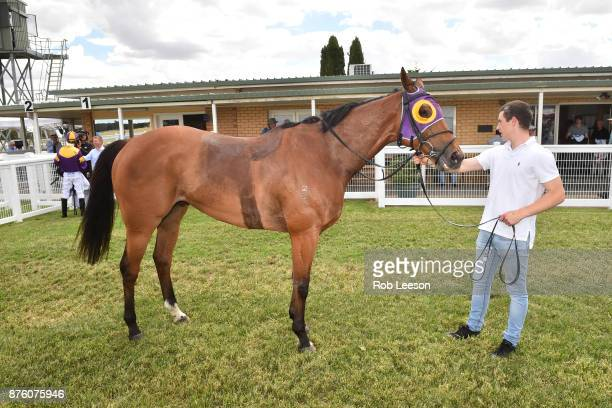 Kilowatt after winning the Gilchrist Co BM64 Handicap at Donald Racecourse on November 19 2017 in Donald Australia