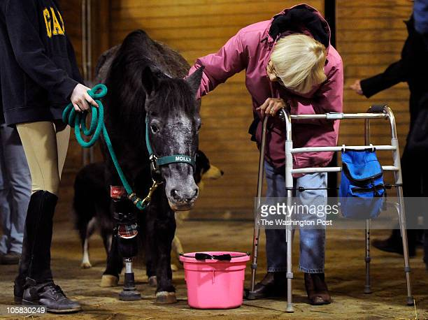 molly pony with prothesis Molly the pony's story begins on august 28th 2005, after hurricane katrina decimated the city of new orleans abandoned by her owners, molly spent a few weeks on her own before being rescued along with other abandoned animals by kaye harris however, molly's troubles were far from over while at.